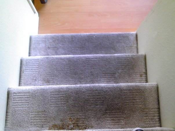 Methods and Benefits of Carpet Cleaning Wildomar Carpet Company